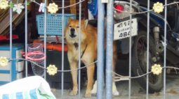 Cachorro comove vizinhos ao esperar dono que morreu vítima de Covid-19