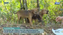 Filhotes de cães e gatos abandonados: animais procuram lar