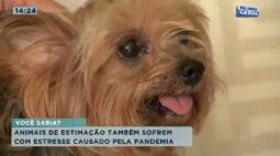 Animais de estimação também sofrem com estresse causado pela pandemia