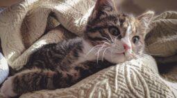 Cobasi inicia Campanha do Agasalho Pet