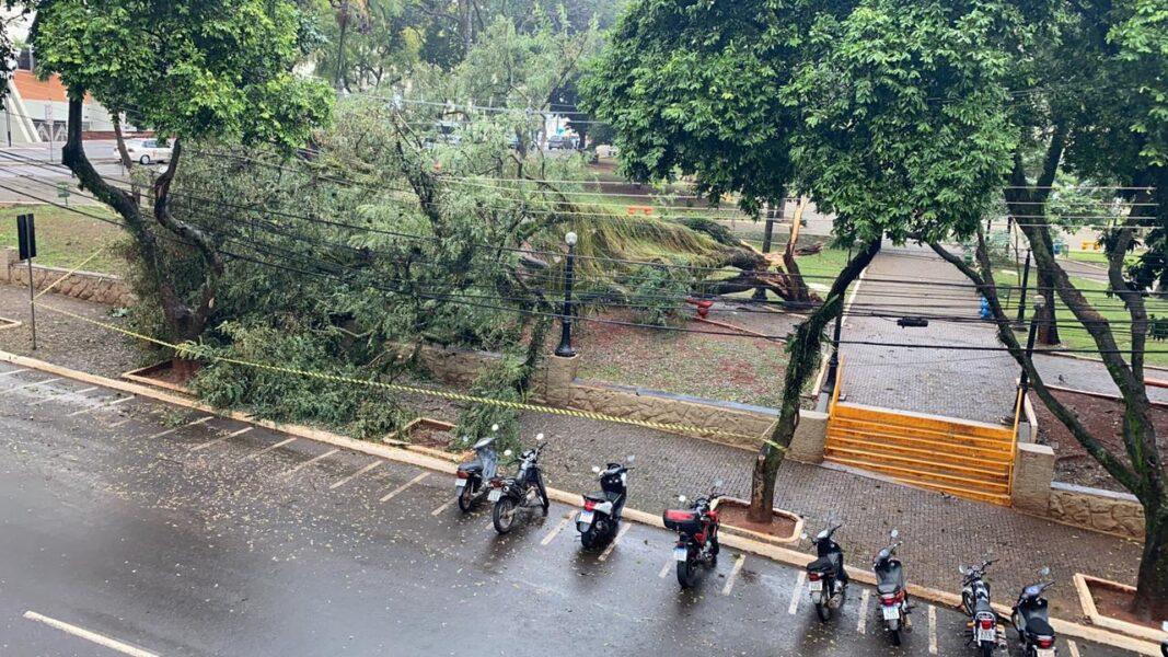 Árvore centenária da Praça da Bandeira quebra ao meio, após chuvas em Londrina