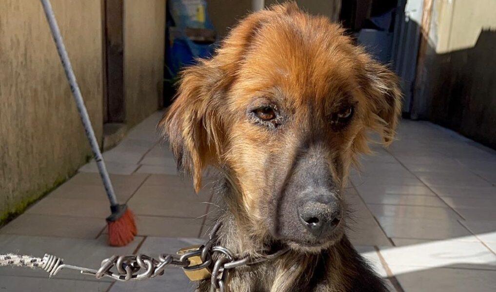 Vídeo: cachorra é resgatada em estado avançado de desnutrição