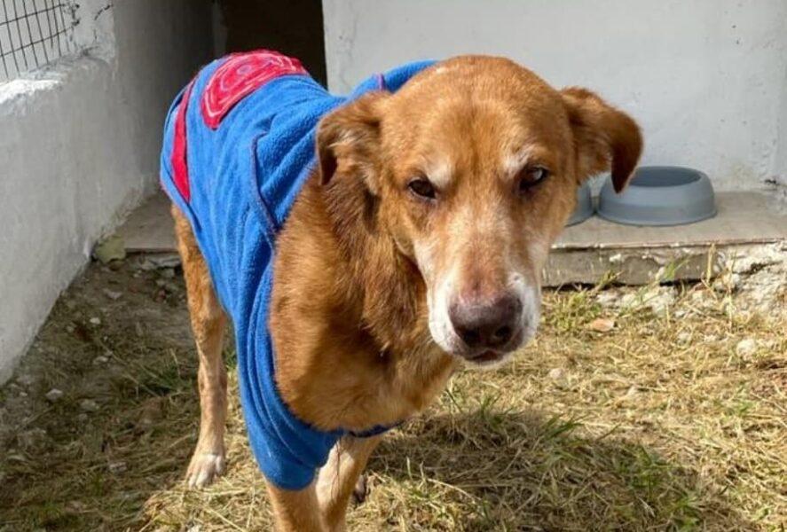 """Homem confessa abandono de cachorro e não se arrepende: """"Ele já era de rua"""""""