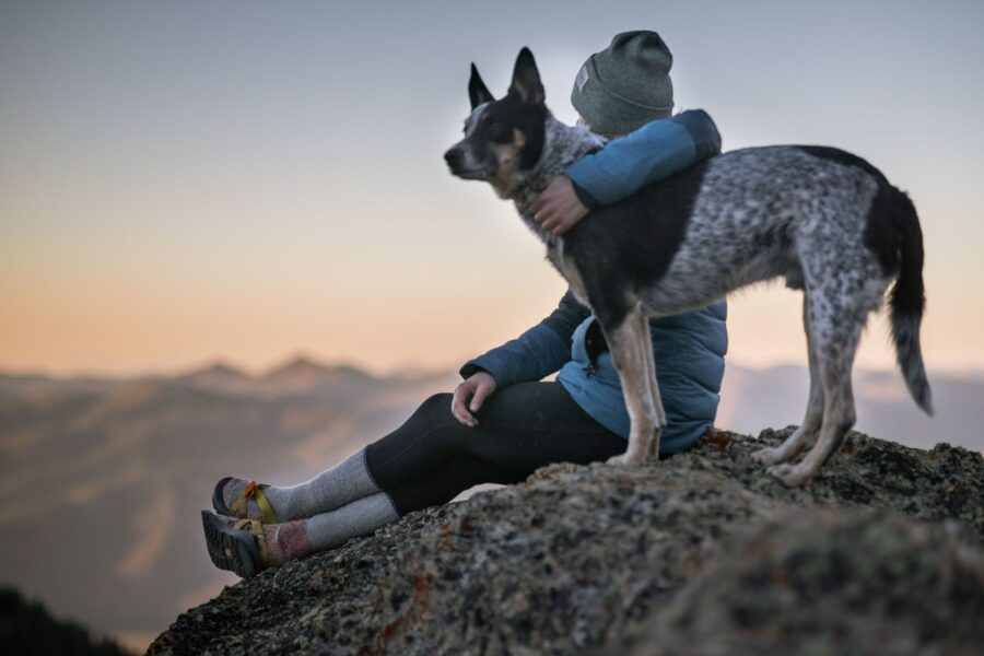Por que o cachorro segue o dono?