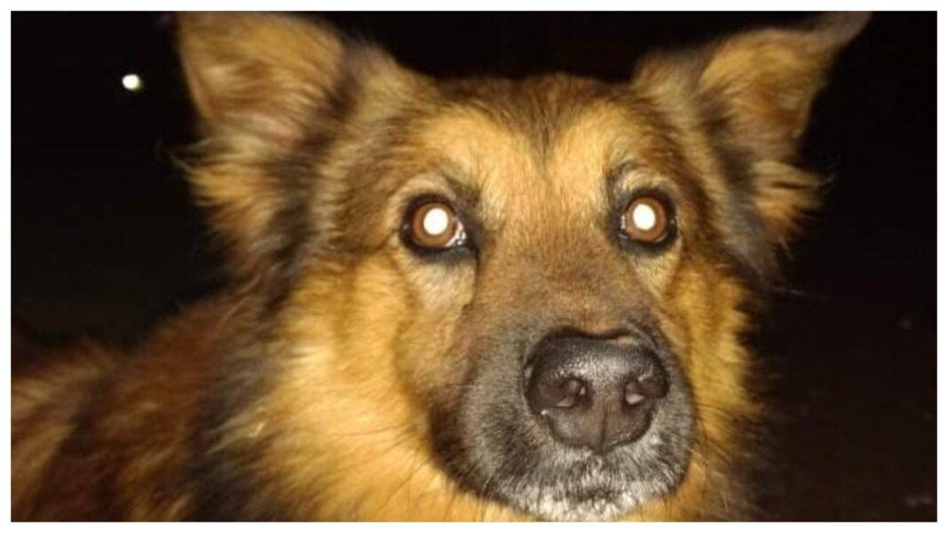 Cão morre em Cascavel e dona registra boletim por possível envenenamento
