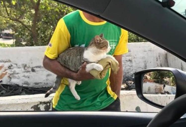 Homem deixa motoristas acariciarem seu gato em troca de moedas no semáforo
