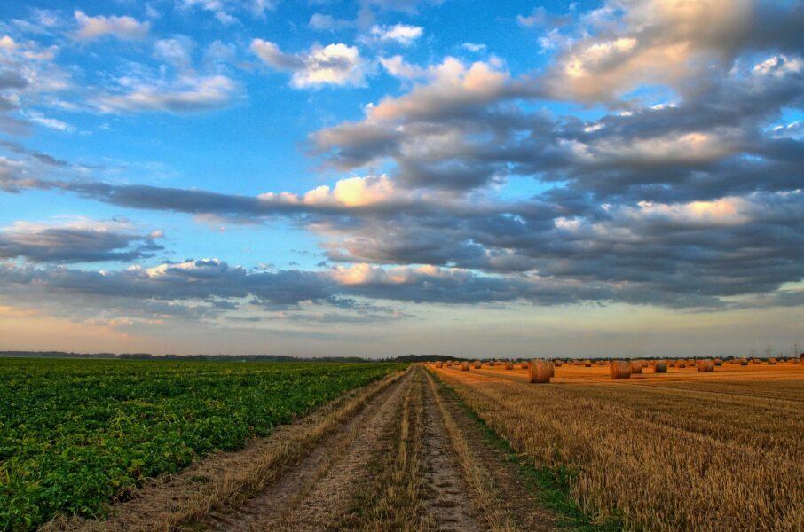 De seca a temporal: produtores vem enfrentando grandes dificuldades na safra deste ano