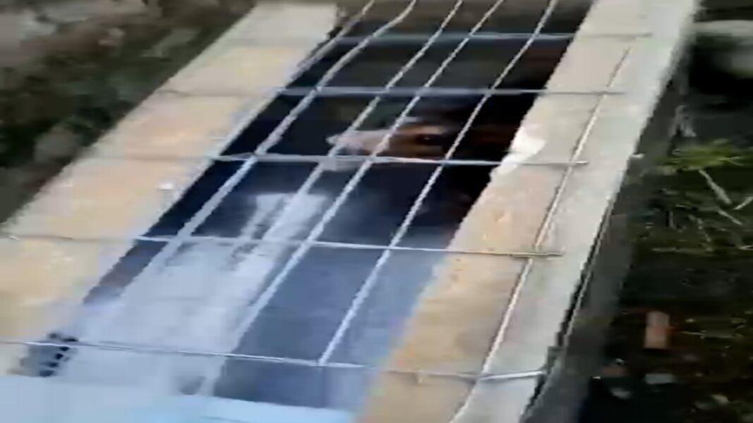 Homem que capturou gambá faz vídeo rindo antes de queimar animal vivo; assista