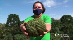 Confira os destaques do RIC Rural de domingo (9 de maio)