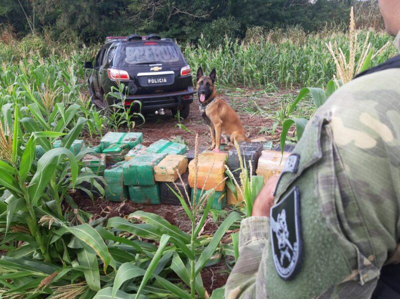 Cão farejador localiza quase uma tonelada de maconha, em Pato Bragado