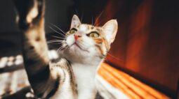 Conheça os sintomas da Síndrome do gato nervoso