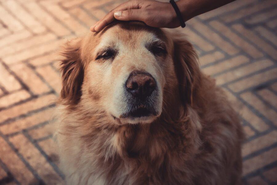 6 cuidados que devemos ter com os cães idosos