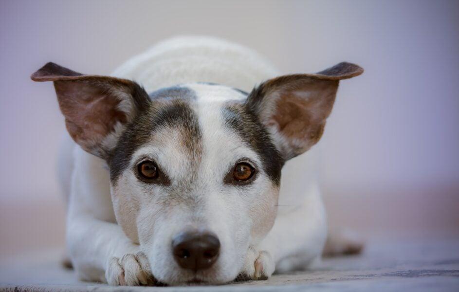 Conheça 6 sinais da comunicação canina