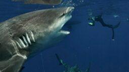 Tubarão extraordinariamente grande é fotografado por mergulhador