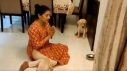 Cachorros rezam antes da refeição e viralizam na web; veja o vídeo