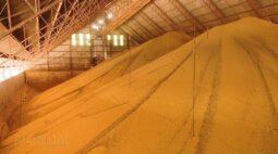 Impostos de importação de soja, milho e derivados é zerado