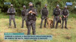 Animais ajudam a encontrar desaparecidos em áreas de mata, procurados e drogas