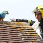 Arara 'boca suja' solta palavrão após ser resgatada por bombeiro