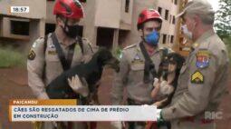 Cães são resgatados de cinema de prédio em construção em Paiçandu
