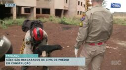 Cães são resgatados de cima de prédio em construção em Paiçandu
