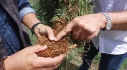 ILPF ajuda na preservação ambiental e produção de alimentos