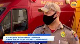 Cachorra acompanha dono na ambulância e faz plantão no hospital em Foz do Iguaçu