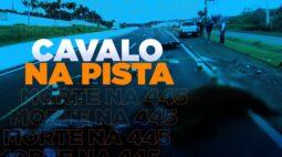 Animal na pista: motociclista morre ao bater contra cavalo na PR-445 em Londrina
