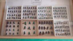 Projetos da UEL estudam a extinção das abelhas no norte do Paraná