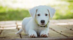 Tinder canino: aplicativo ajuda animais em adoção a encontrarem um lar