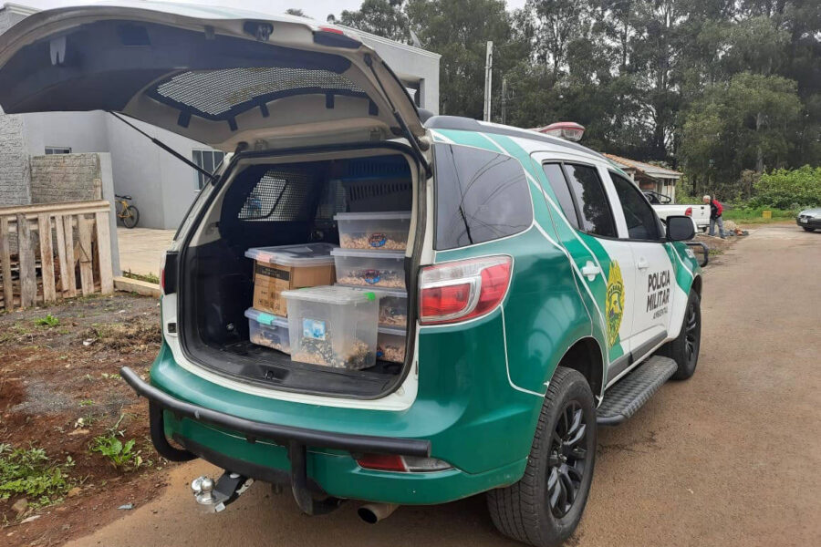 Polícia Ambiental e IAT identificam criador ilegal de ouriços em Guarapuava; homem foi multado em R,4 mil