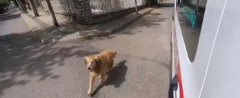 Mulher passa mal e seu cachorro é flagrado seguindo a ambulância até o hospital; assista