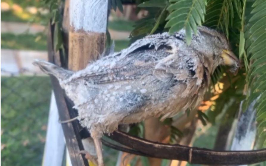 Pássaro fica congelado no Paraná após noite de temperaturas negativas