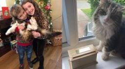 Família fica chocada quando gato que teriam cremado aparece vivo na porta de casa