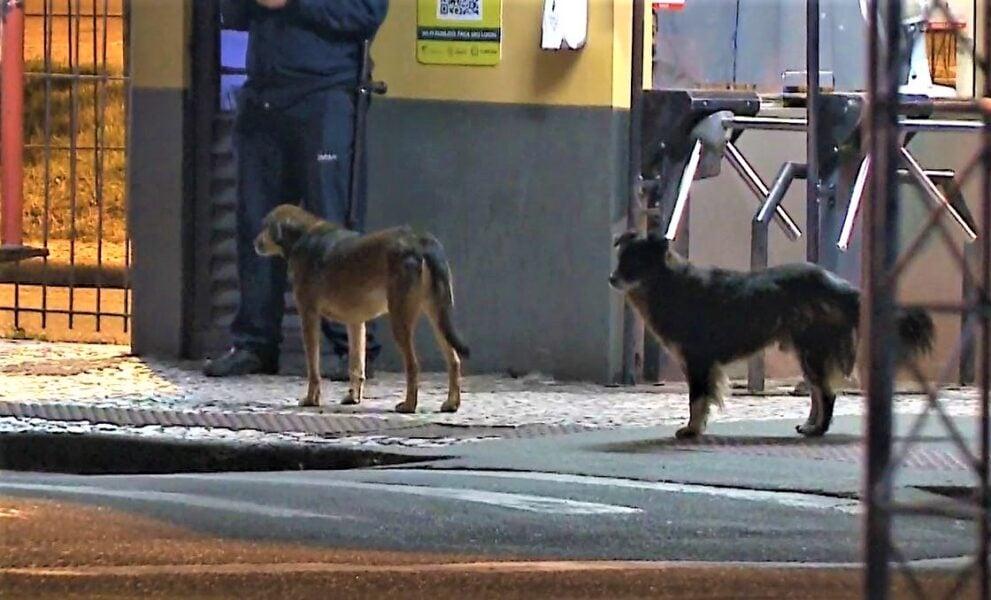 Homem é atacado por cachorro dentro de terminal de ônibus em Curitiba