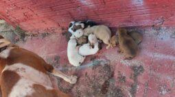 Dez filhotes de cachorro são resgatados de incêndio na mata