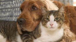 Como apresentar o novo cão para o seu gato?