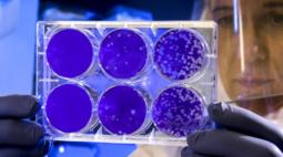 Cascavel registra seis mortes por Covid-19 e 293 novos casos da doença