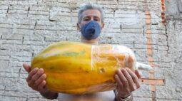 Pescador cultiva mamão gigante e precisa convencer amigos de que é verdade