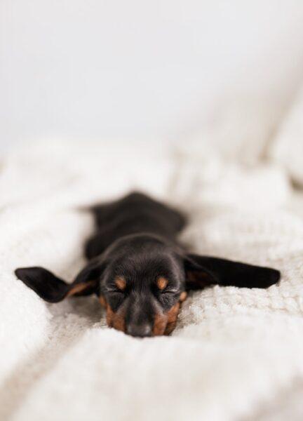 Saiba como funciona o protocolo de vacina para cachorro filhote