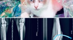 Ajude a gatinha Nina, que quebrou a perna após ser ferida com um tiro de chumbinho