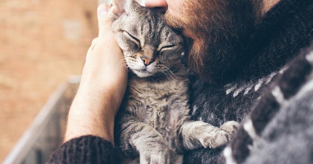 Aspectos a considerar antes de adotar um gato