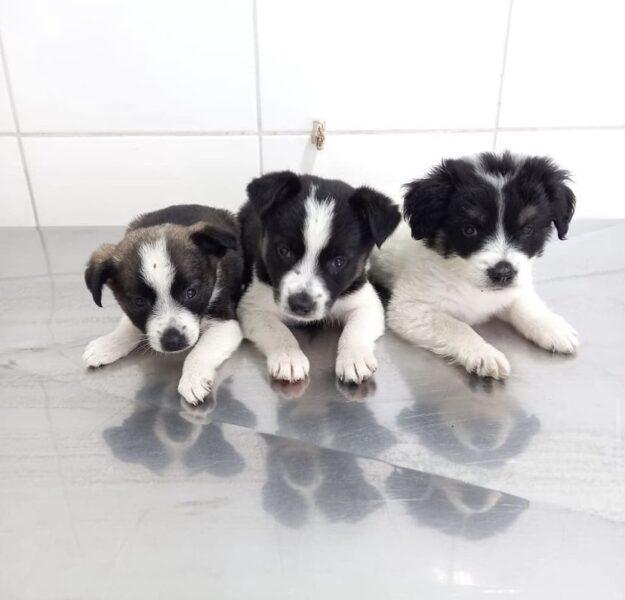 Evento de adoção de animais resgatados acontece neste sábado (12) em Curitiba