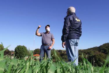 Início da safra de trigo anima produtores do Paraná