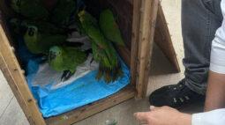 Papagaios vítimas de tempestade recebem alta e retornam à natureza