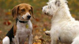 Como apartar uma briga entre cães