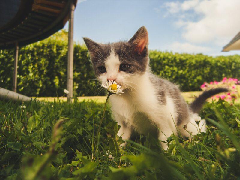 Graminha para gatos: saiba por que você deve apostar nela