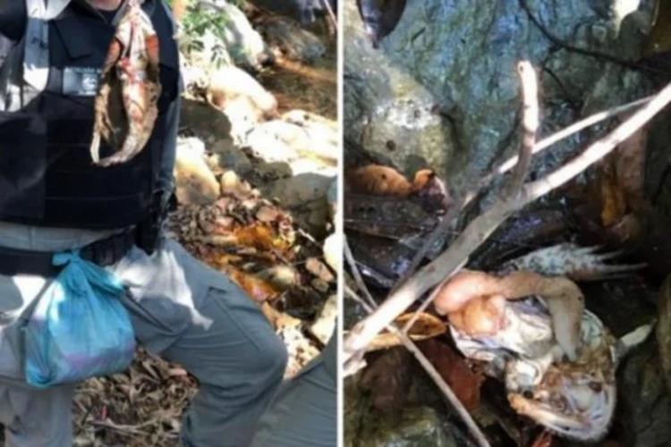 Lázaro tem se alimentado de rãs selvagens e aves furtadas, dizem equipes de busca