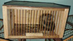 Sagui-de-tufo-branco é encontrado em gaiola de cativeiro, em Londrina