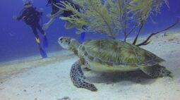 Tartaruga é salva por mergulhador após respiração boca a boca