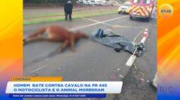 Homem bate contra cavalo na PR-445: o motociclista e o animal morreram